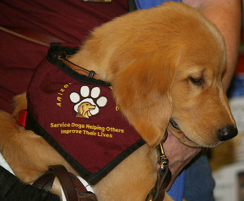 Service Dogs For Autism
